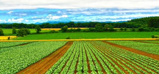 農業への転職にはどんな方法がある?