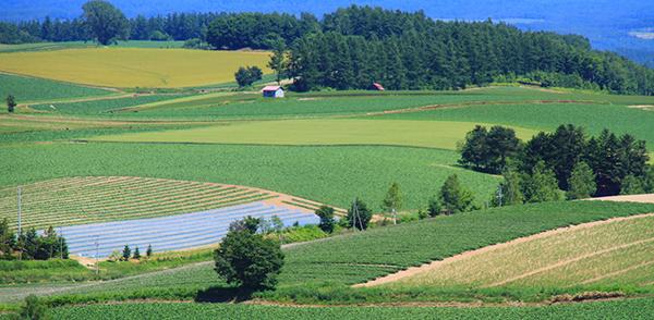 農業を始めるために必要な農地